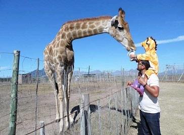 Giraffe House in Cape Town