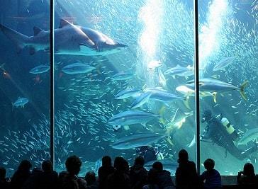 Two Oceans Aquarium in Cape Town