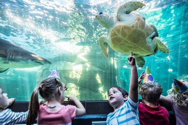 Zoos and Wildlife Parks in Cape Town